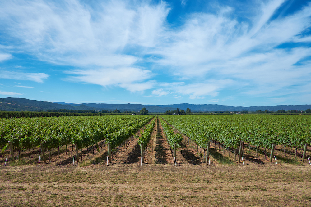 Sonoma City Considers Moratorium on New Wine Tasting Rooms
