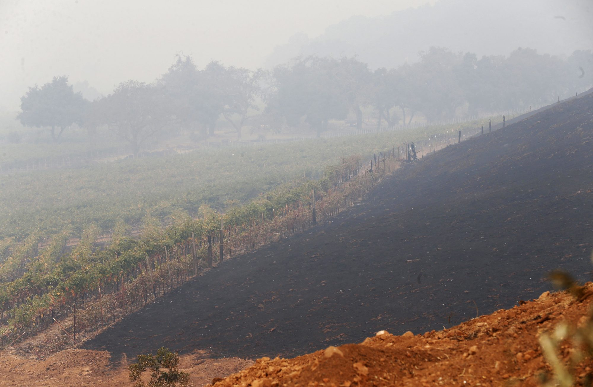 How California's Wildfires Are Affecting the Wine Market