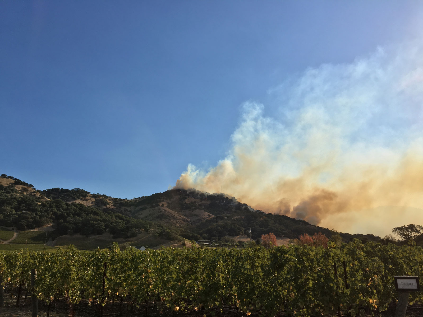 Amid Tragedy in California's Wine Country, There's Some Cause for Hope