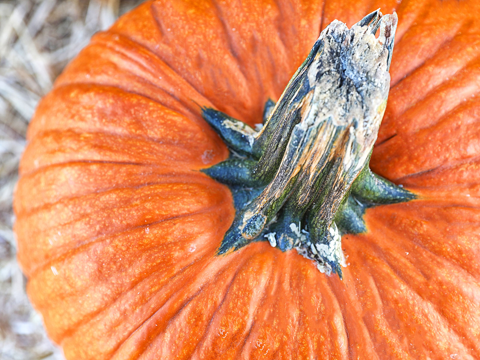 giant pumpkin records at weigh off