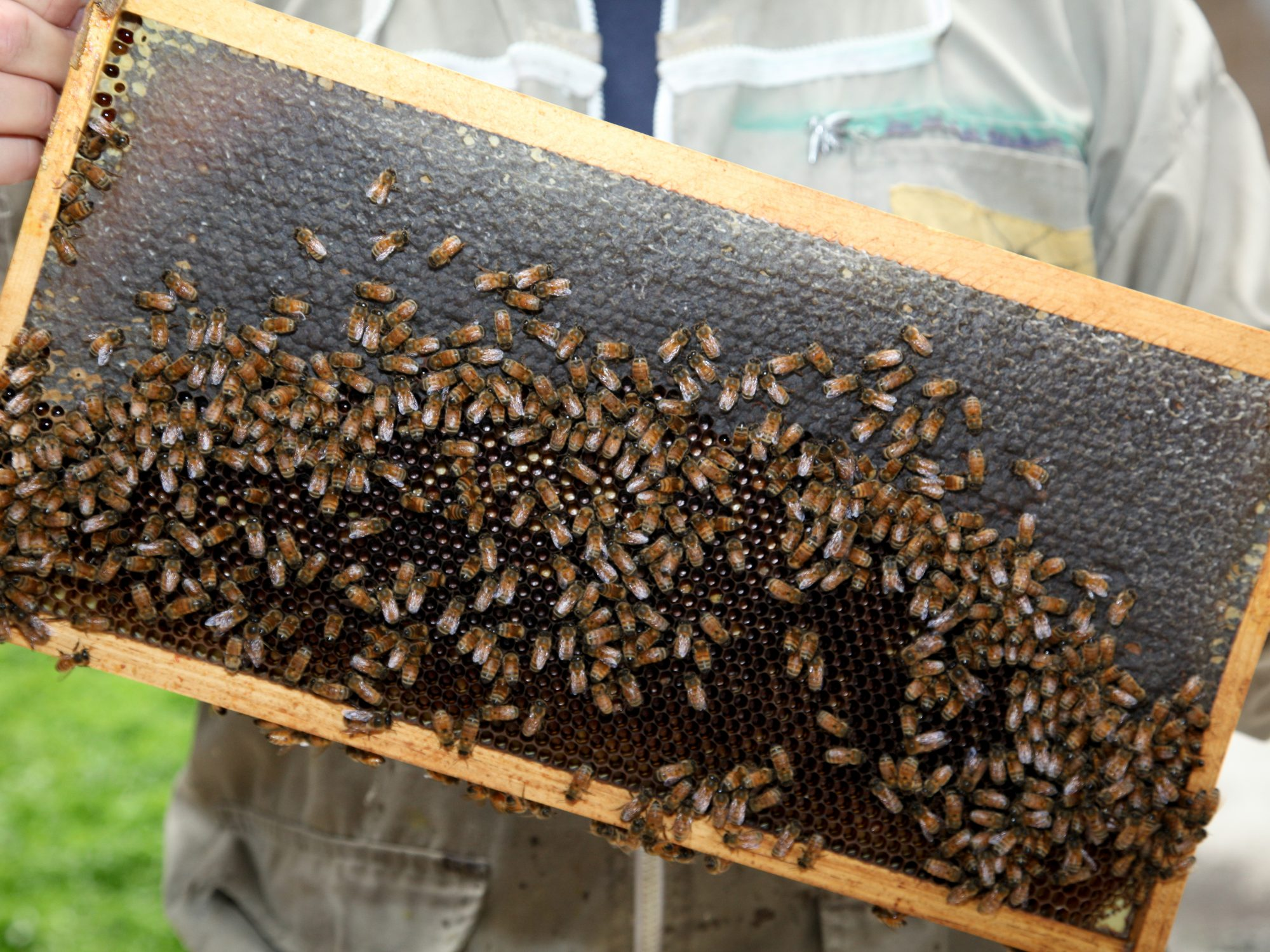 New York Hilton Midtown Goes Hive-to-Table With 450,000 New Bees