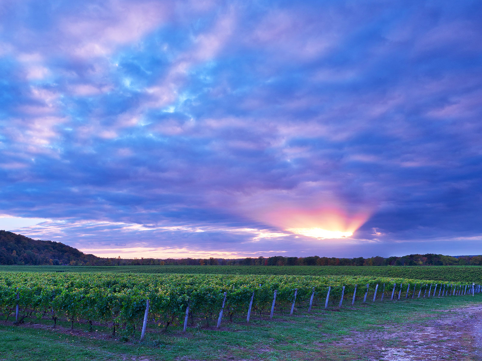 Canada Has a Napa—And It's Right Over The Border