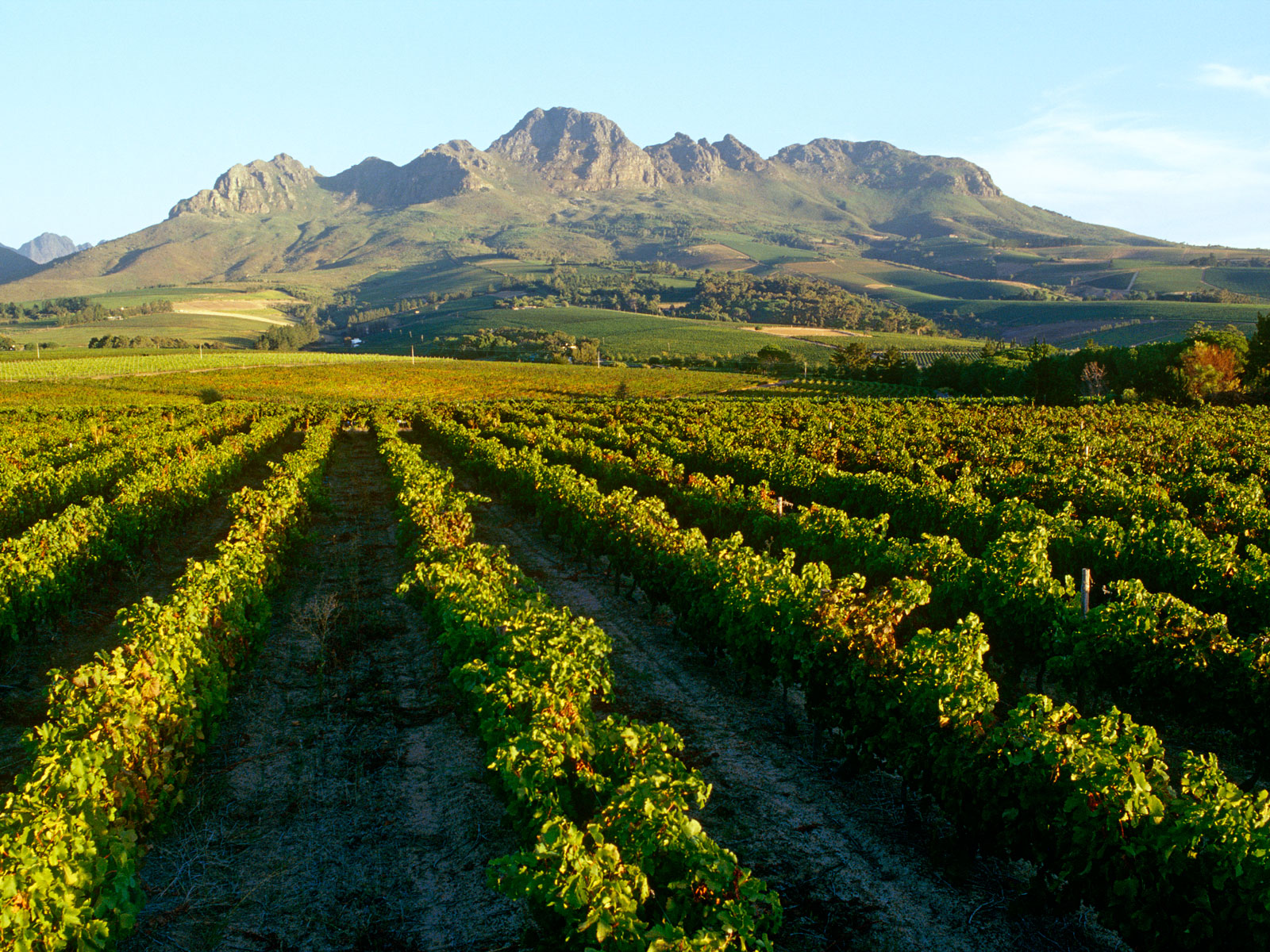 The Women Making the South African Wine Scene 'Less Pale and Male' | Food & Wine