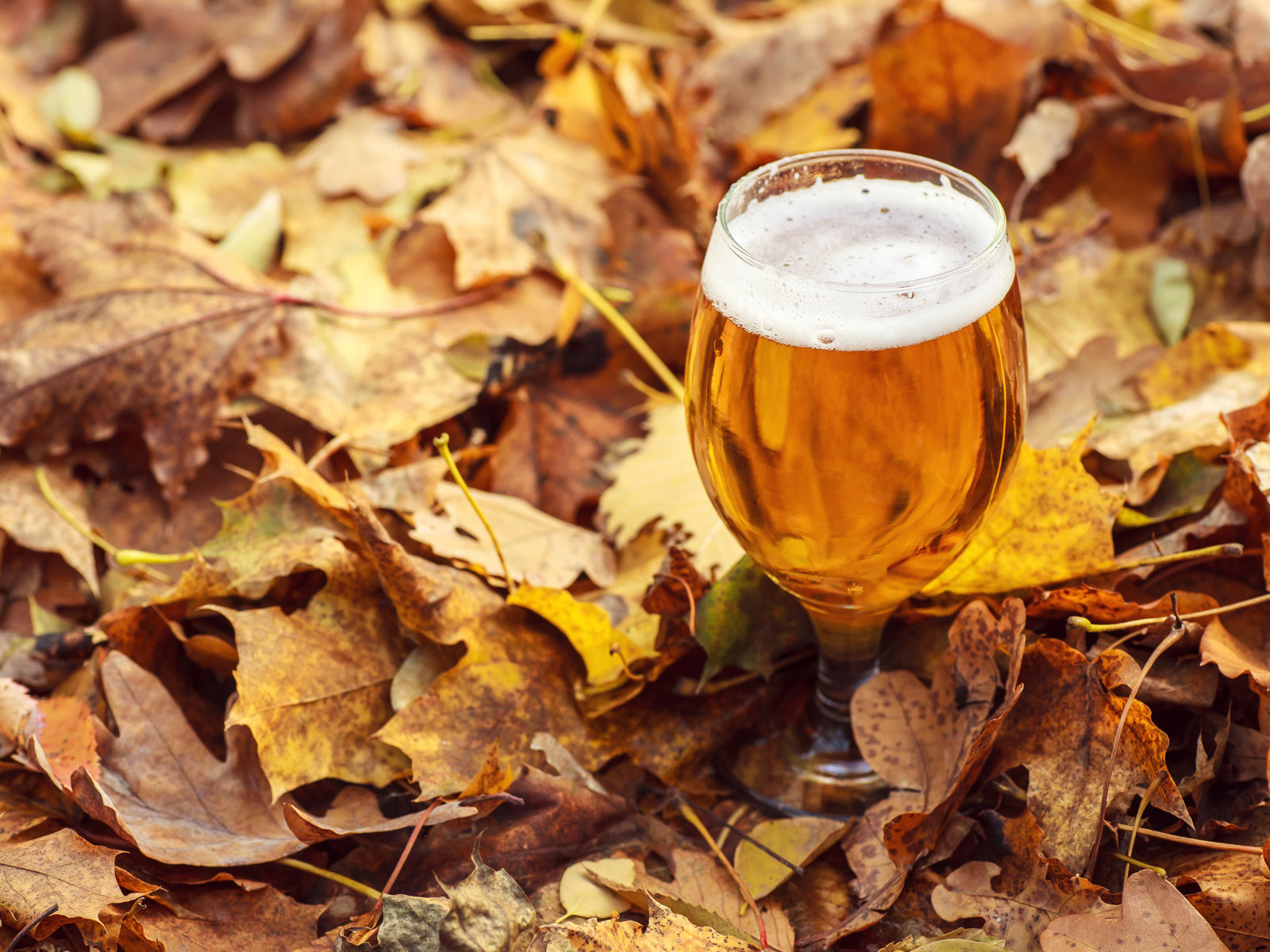 How to Enjoy Thanksgiving Dinner Entirely in Beer Form