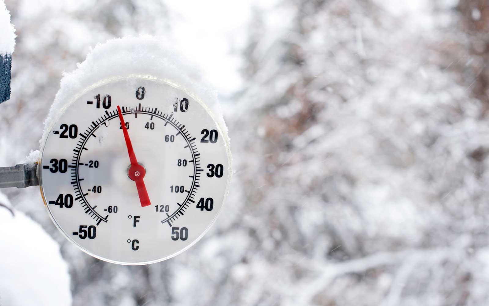 Thermometer in snow on the side of a tree