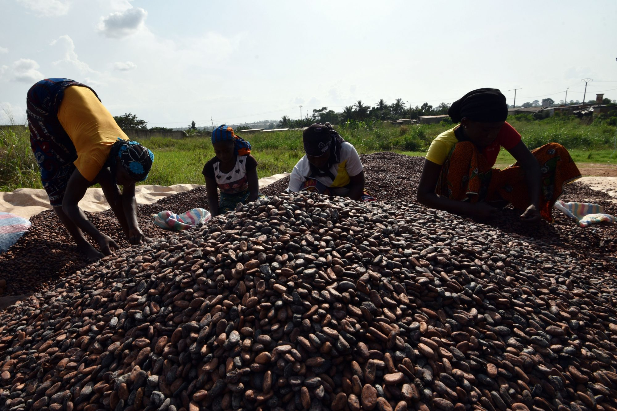 How We Can Save Chocolate From Going Extinct