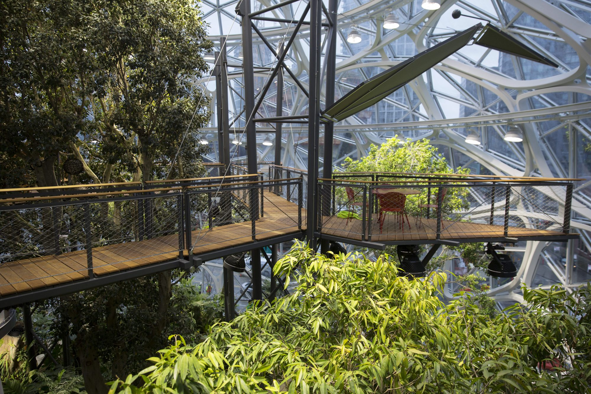 Amazon Just Expanded Its HQ in Seattle. Now It Has a Rainforest