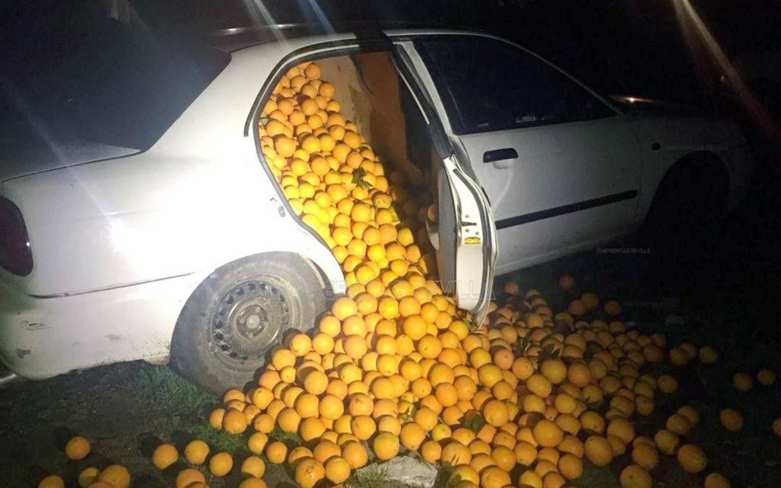 Family Steals 8,000 Pounds of Oranges in Spain, Gets Arrested