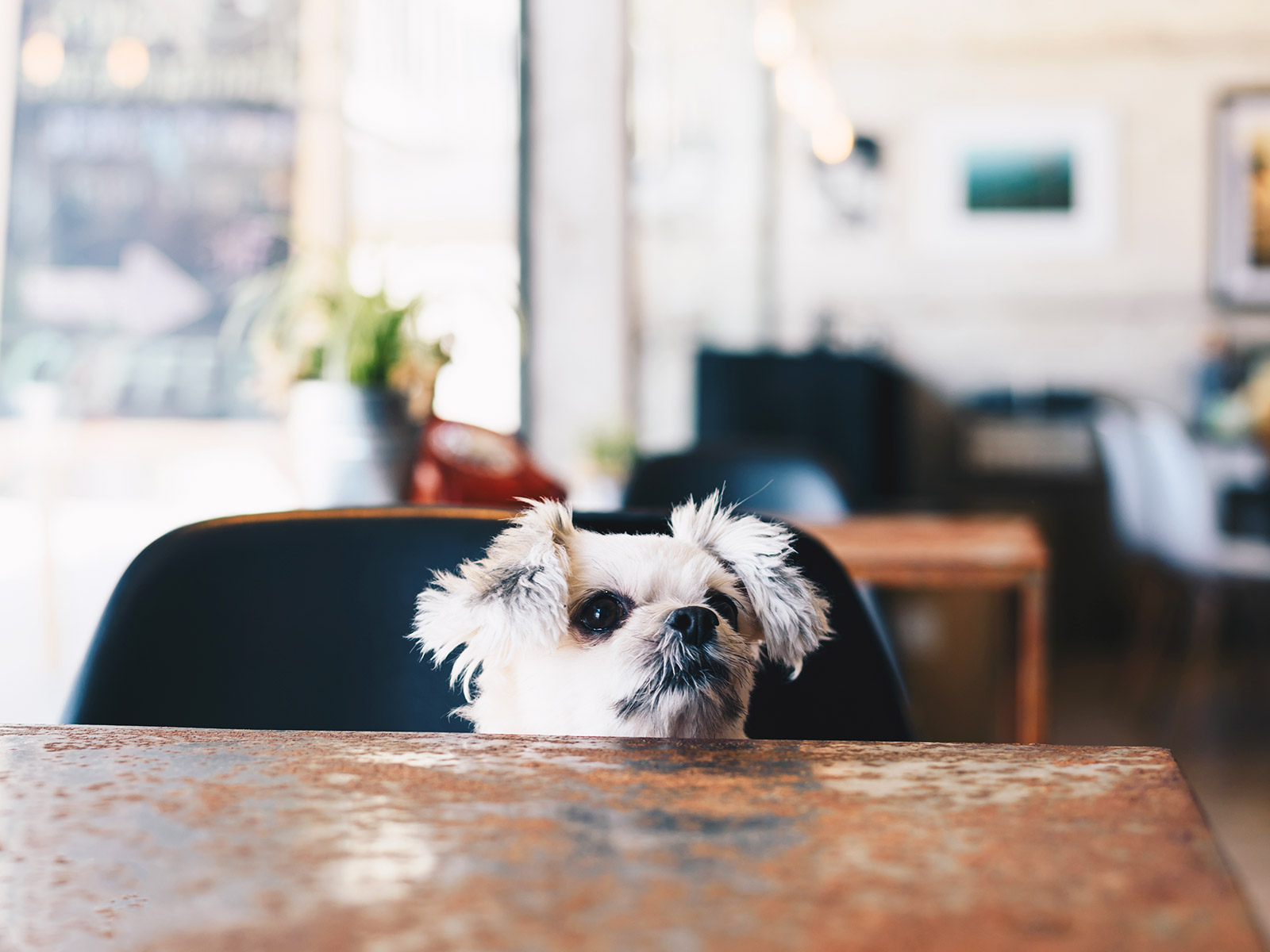 puppy cafe in nyc