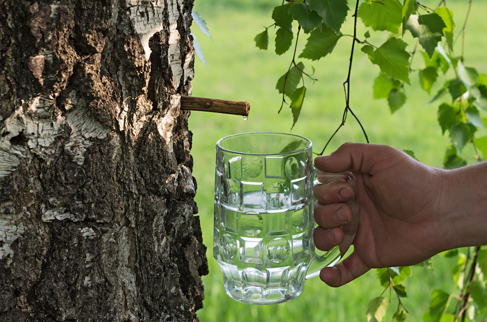 Would You Drink Organic Tree Water Food Amp Wine