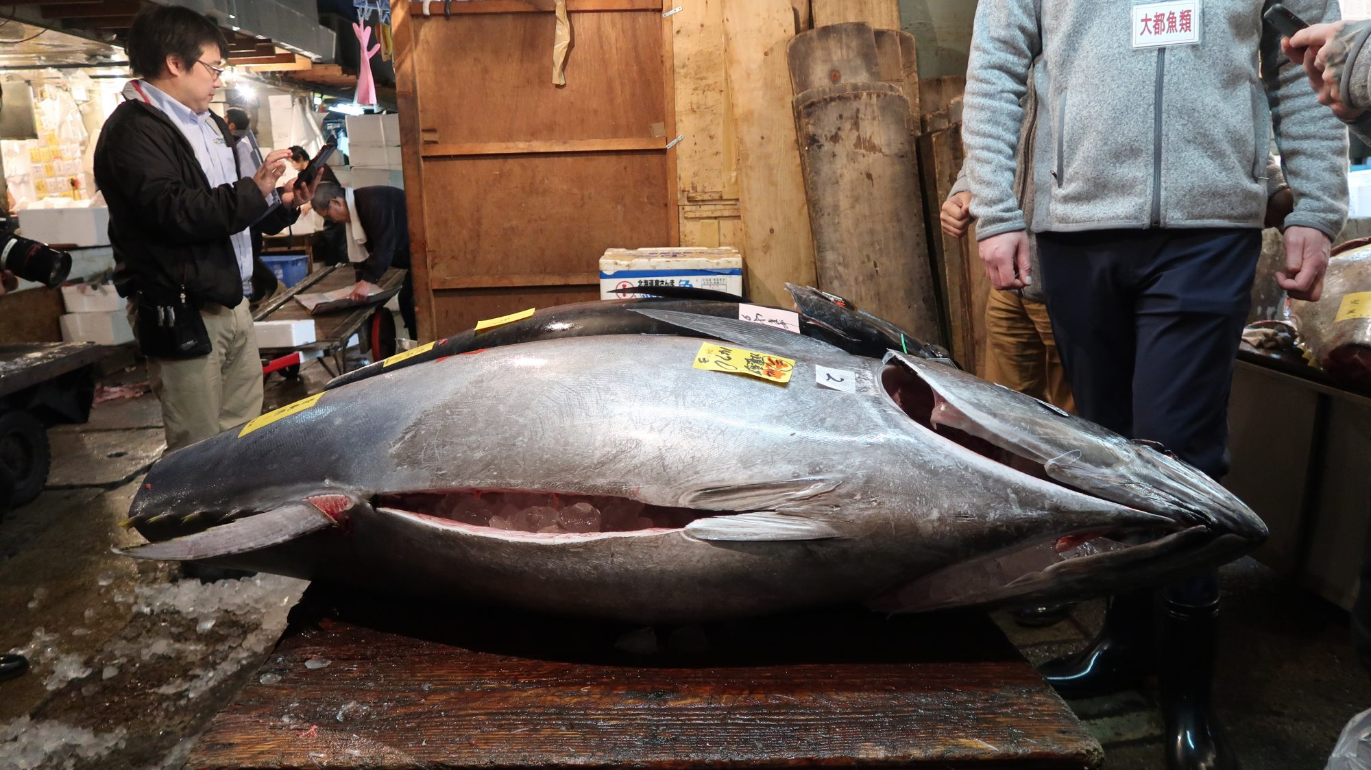 tsukiji-fish-market-tuna-blog1117.JPG
