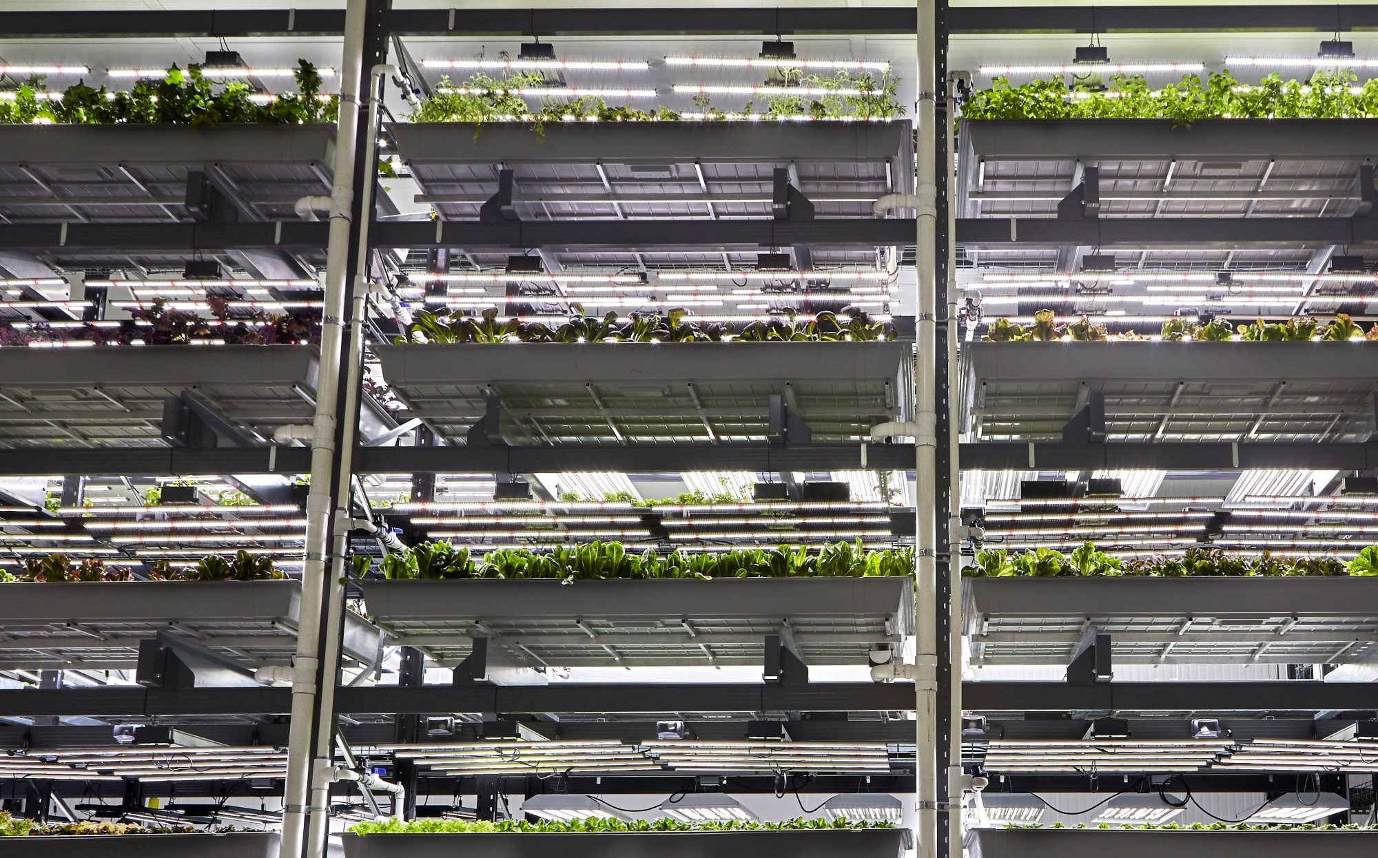 This Startup Is Building the Techiest Indoor Farm in the World