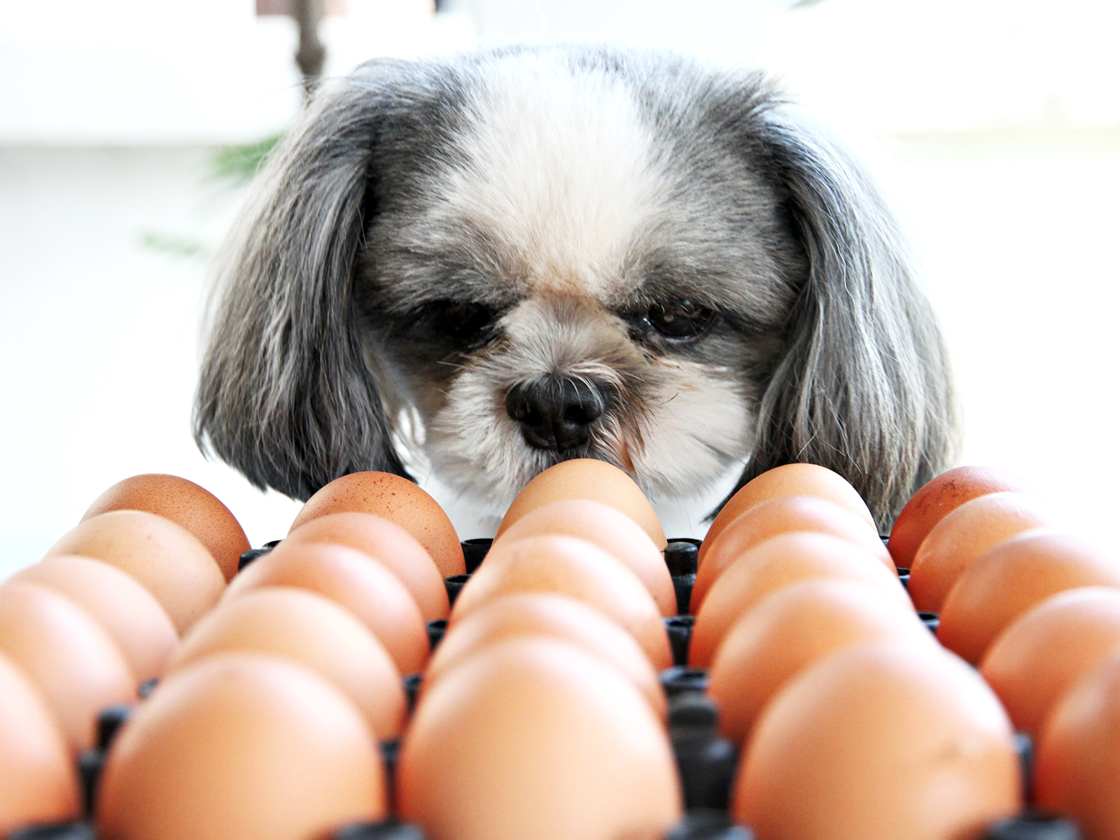 Viral Egg Challenge Proves Dogs Can Be Man's Gentlest Friend