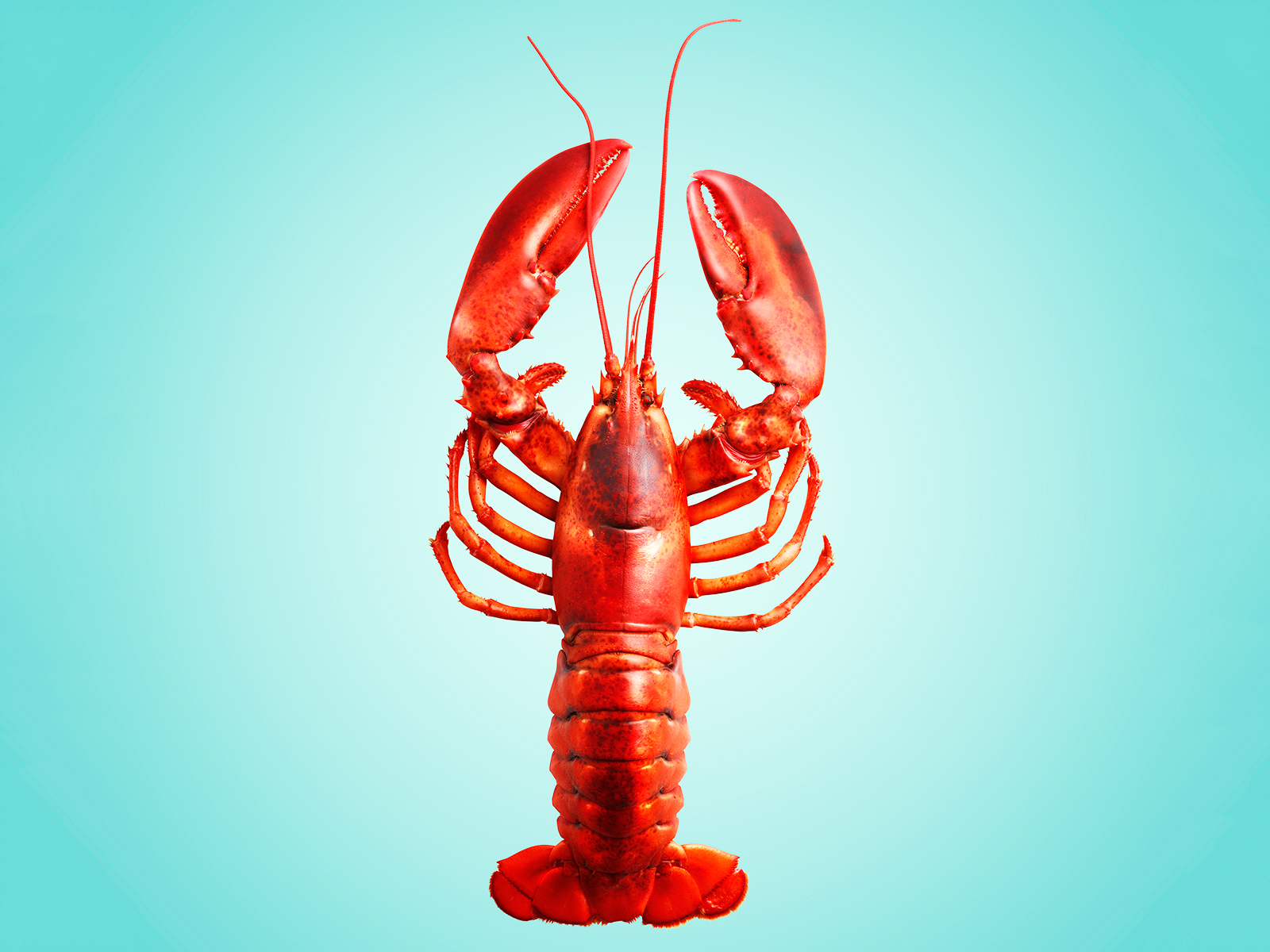 new lobster emoji