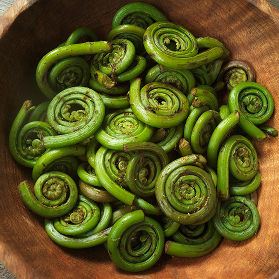 Everything You Need to Know About Fiddlehead Ferns