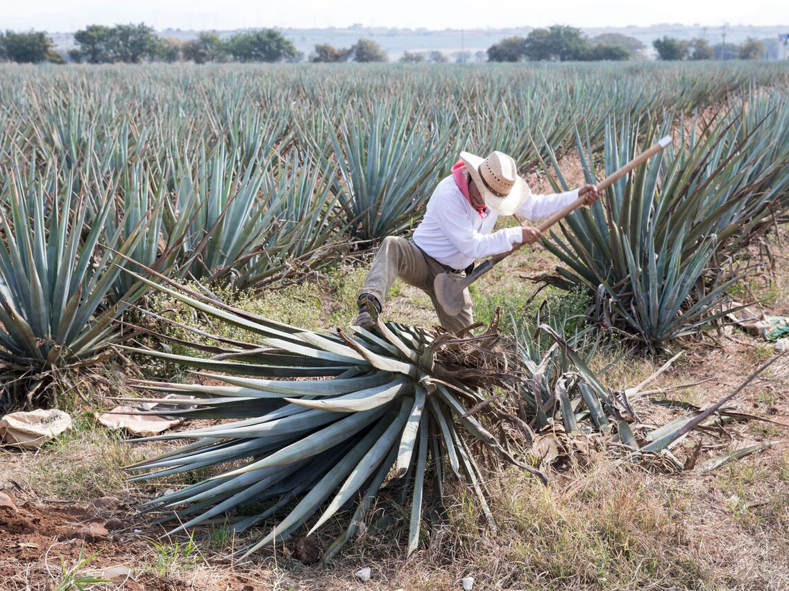 11 Things to Know About Tequila Before Drinking It