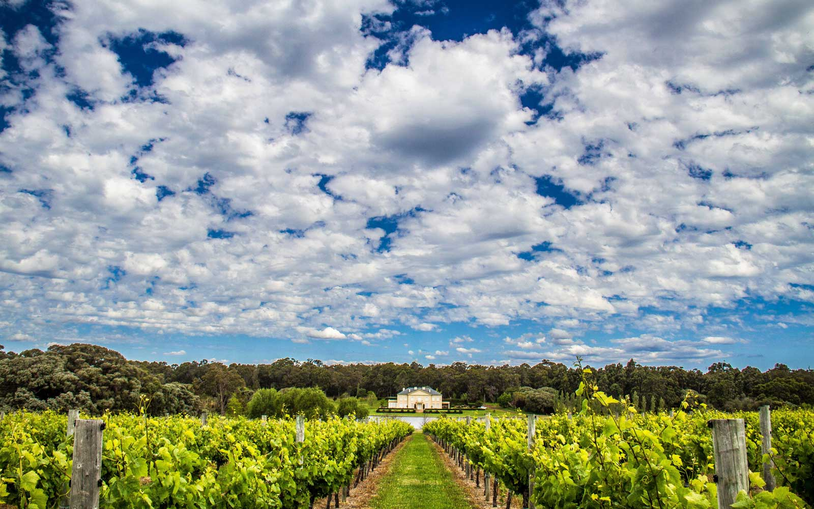 Vineyard in Australia's Margaret River