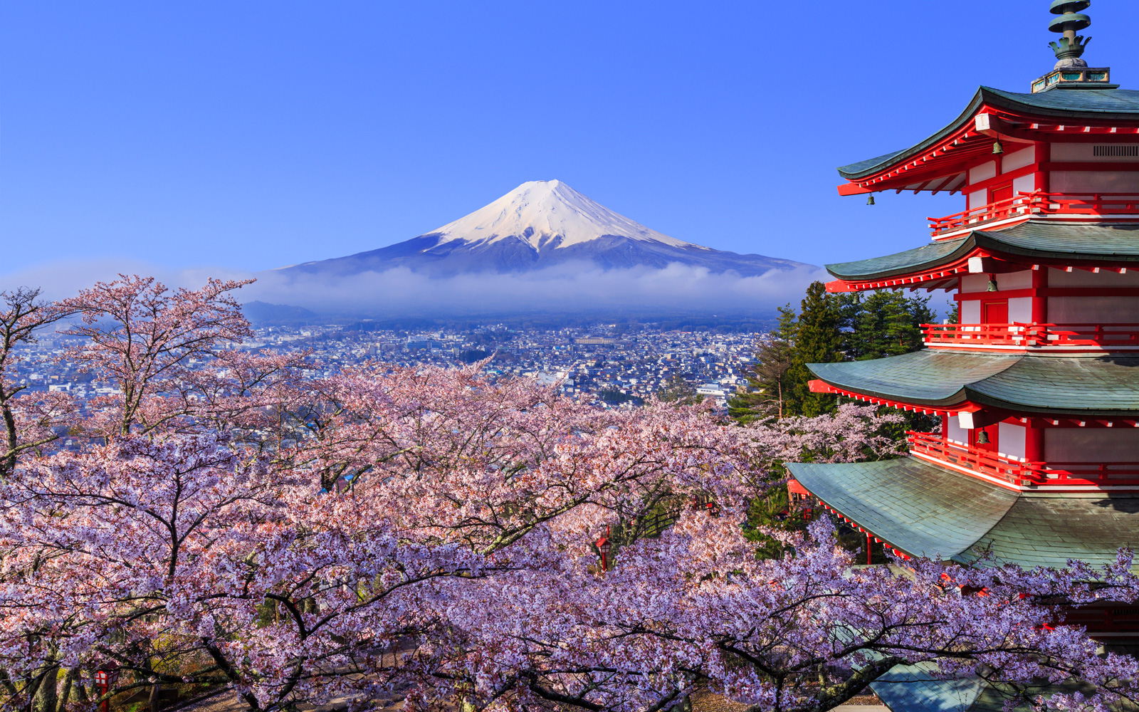 Japan Cherry Blossom Festival 2018: Where and When to Visit