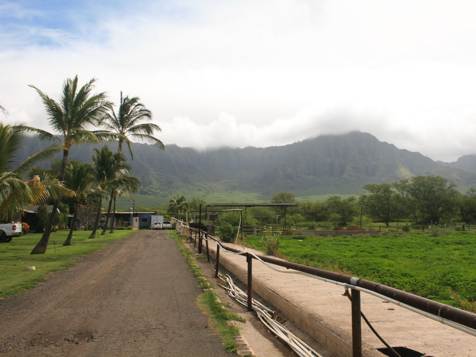 O'ahu's Last Dairy Farm Is Owned and Operated by Women