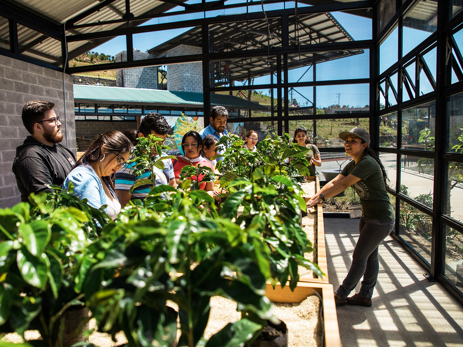 tour of the coffee farms for starbucks
