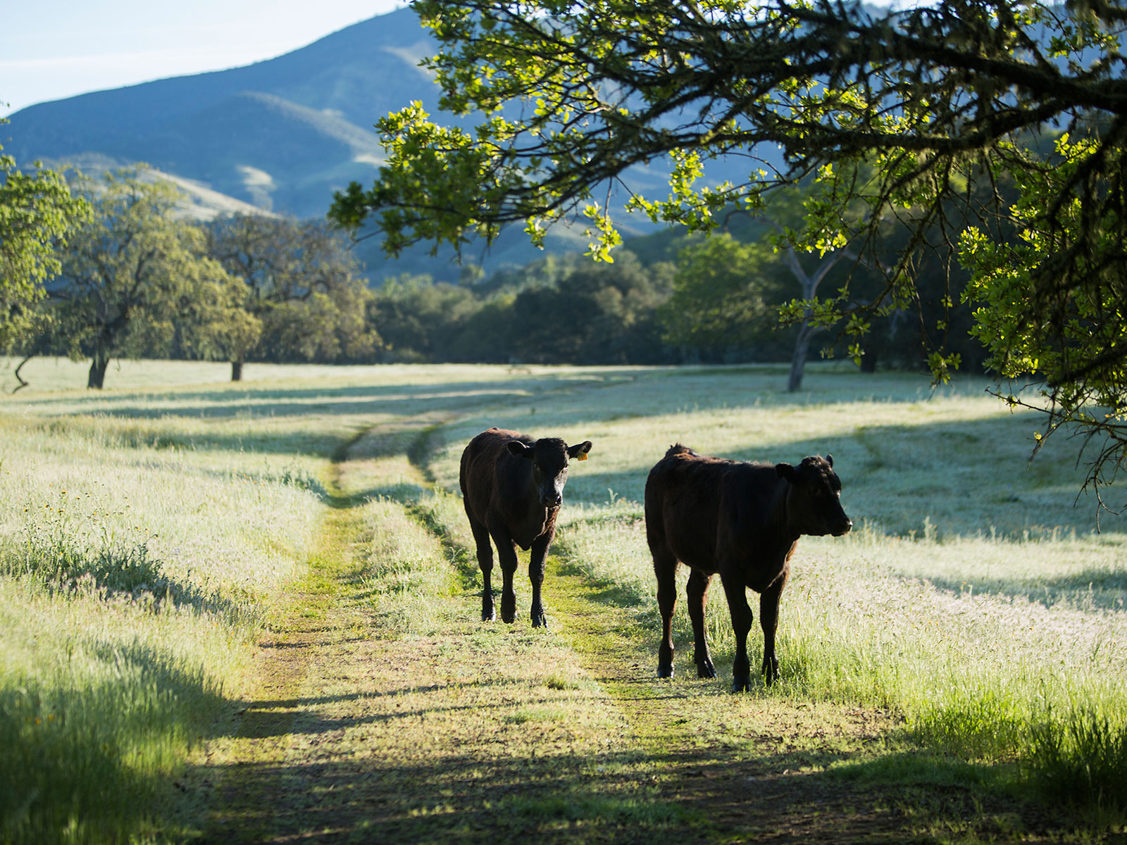One Ranch, One Restaurant: The Bear and Star Is the Central Coast's Wagyu Wonderland