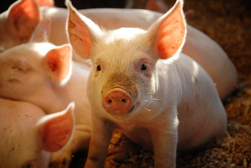 A $50 Million Lawsuit Has the Whole Pork Industry Scared