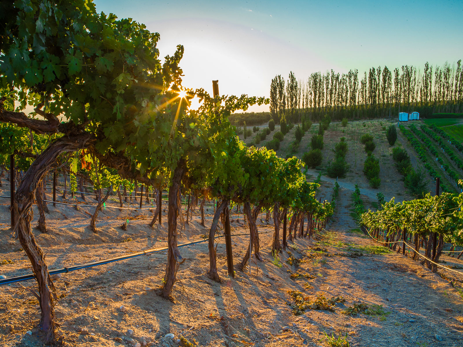 America's Next Must-Visit Wine Region Is Where You'd Least Expect It
