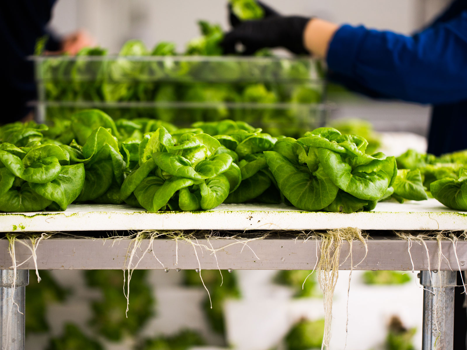 What It's Really Like Inside Bowery Farming, a Vertical Farm on the Rise