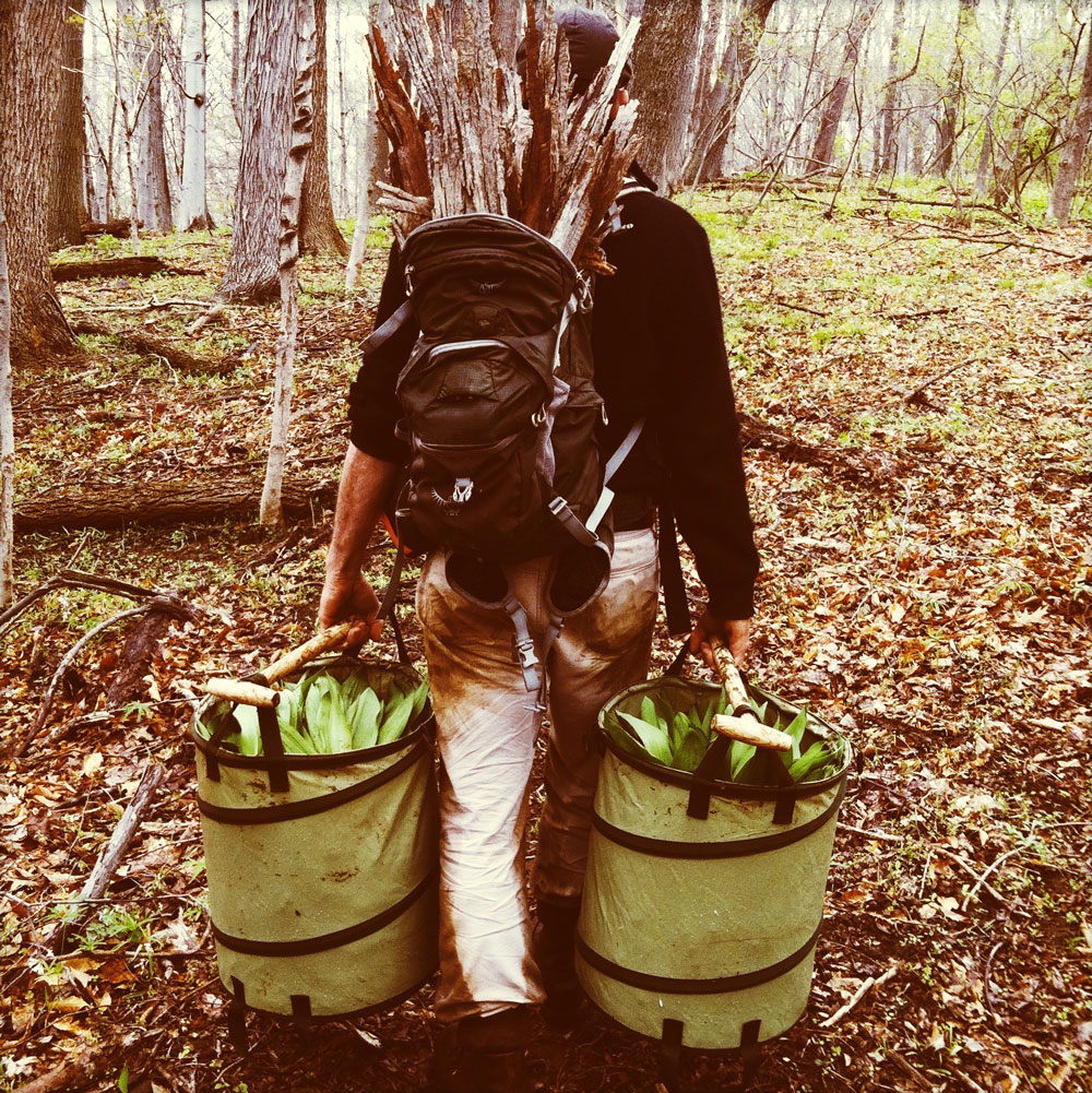 Meet Evan the Forager, the Man Providing NYC's Top Restaurants with Wild and Rare Ingredients