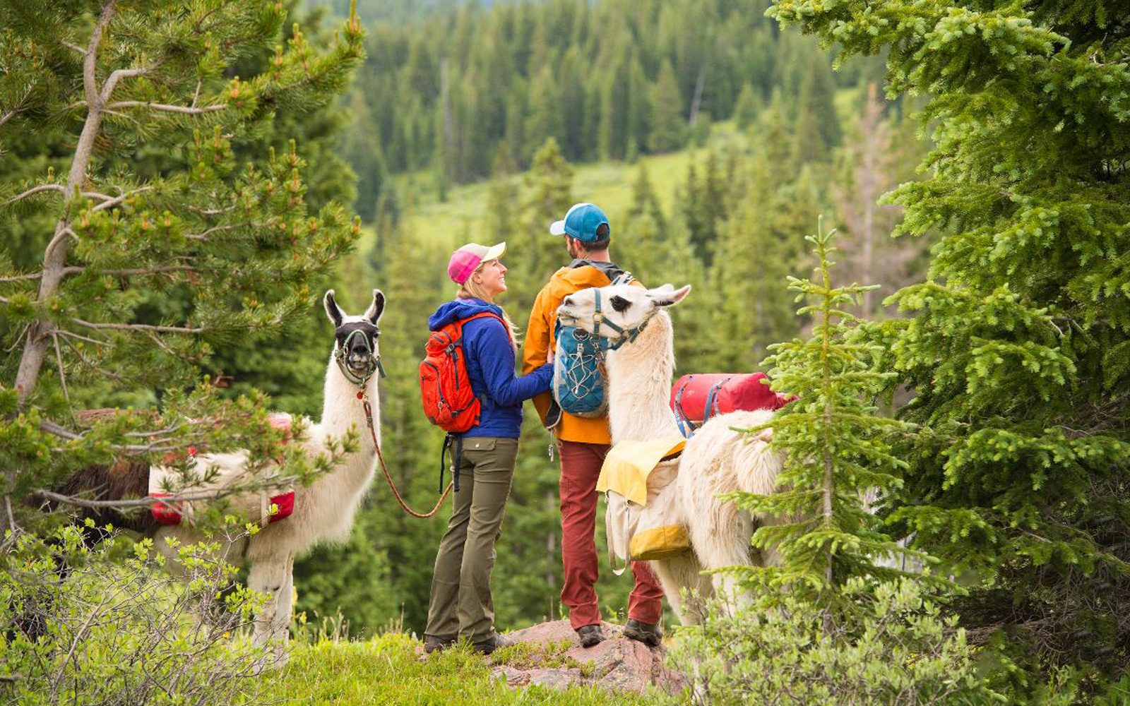 You Can Take a Llama to Lunch in Colorado
