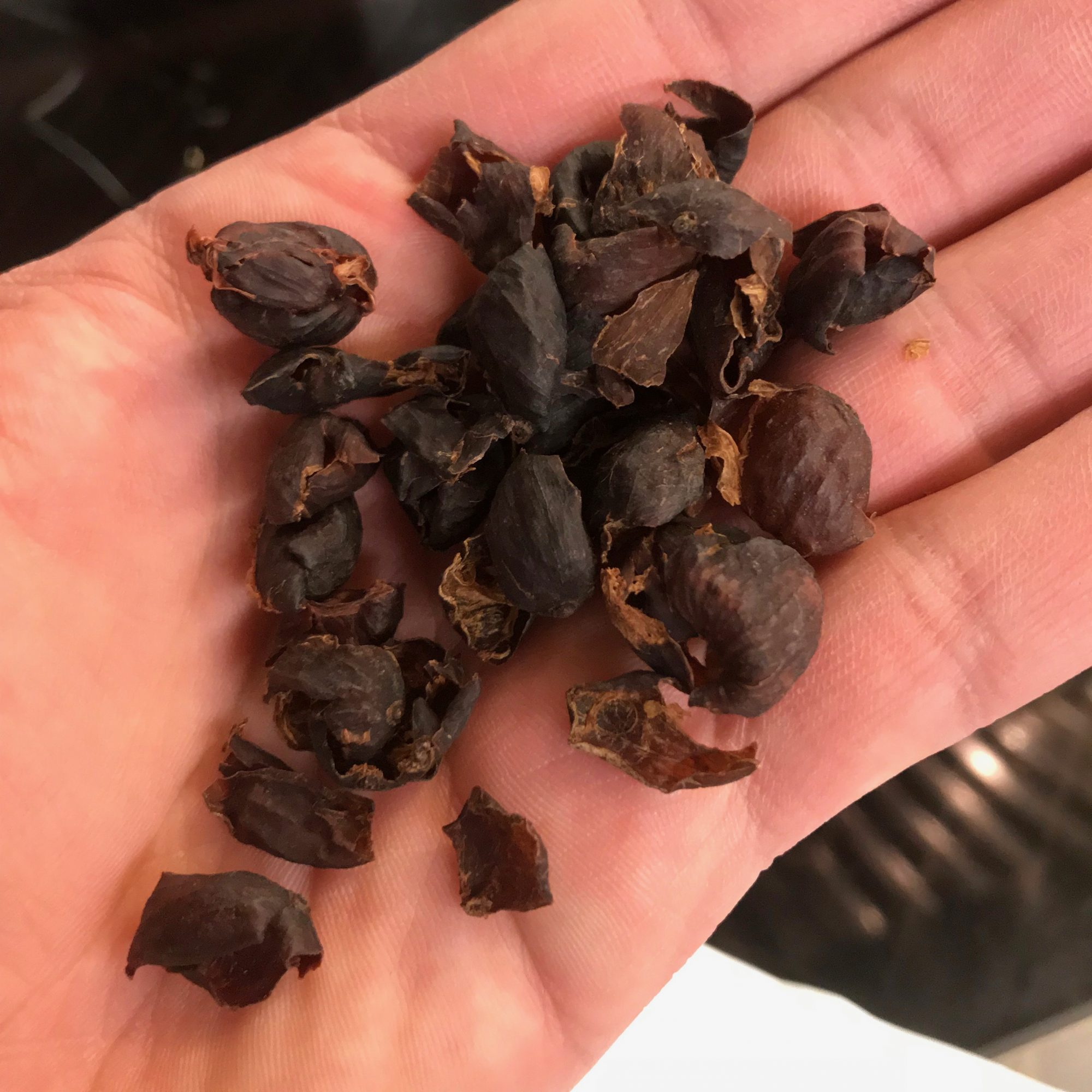 Cascara shells no waste drink