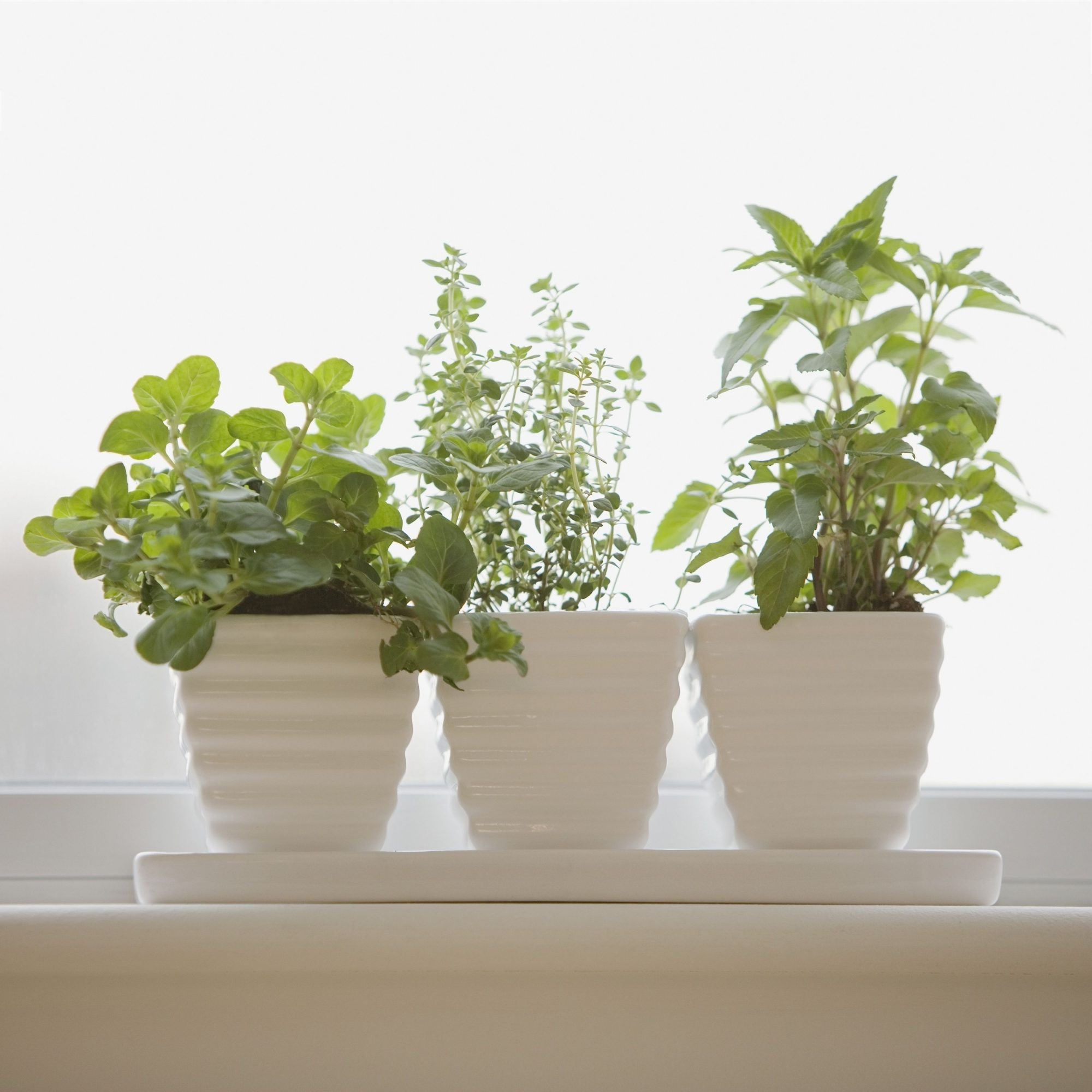The Best Herbs to Grow in Your Windowsill