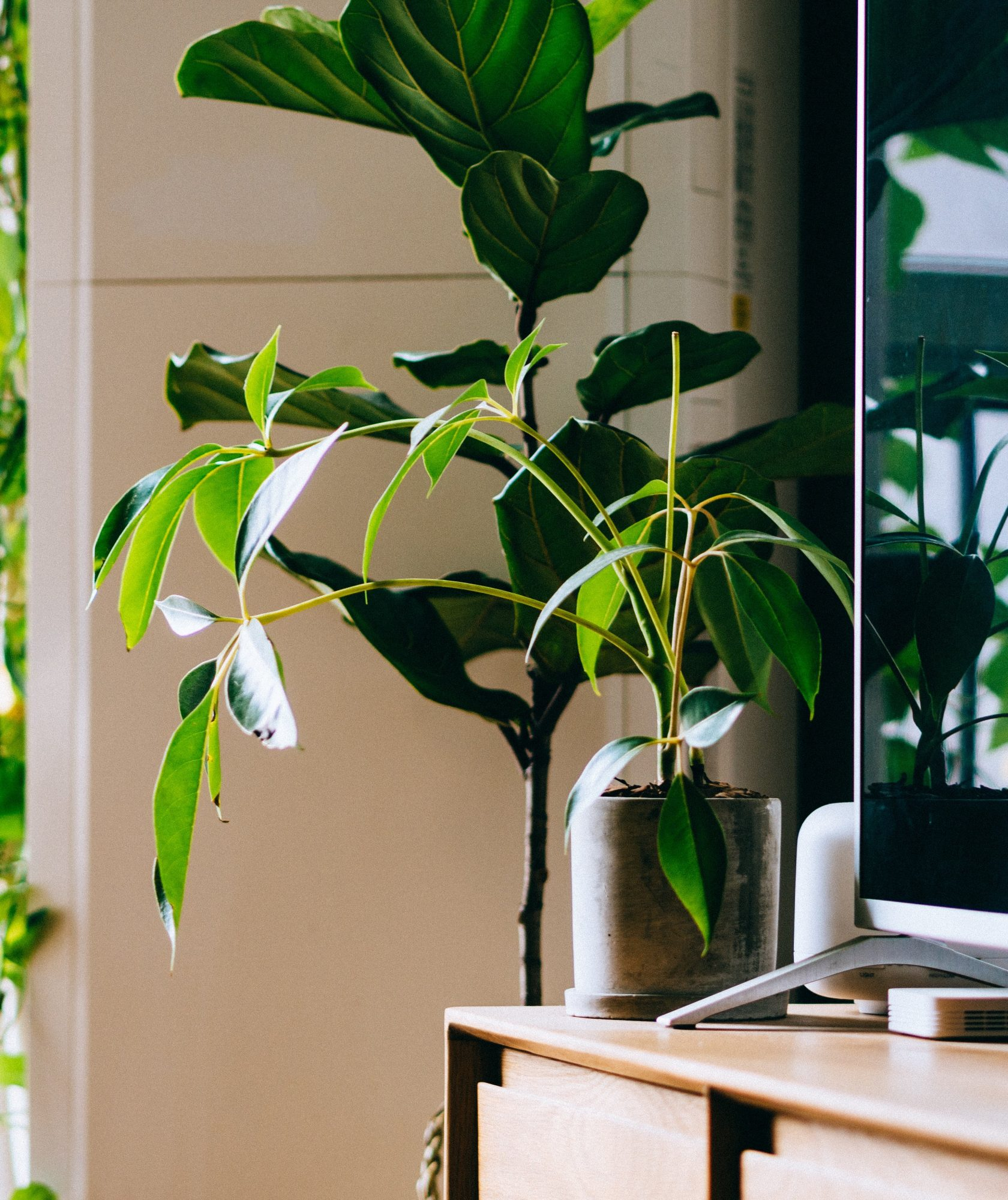 The Surprising Health Benefits of Owning House Plants(and How to Incorporate Them Into Your Decor)