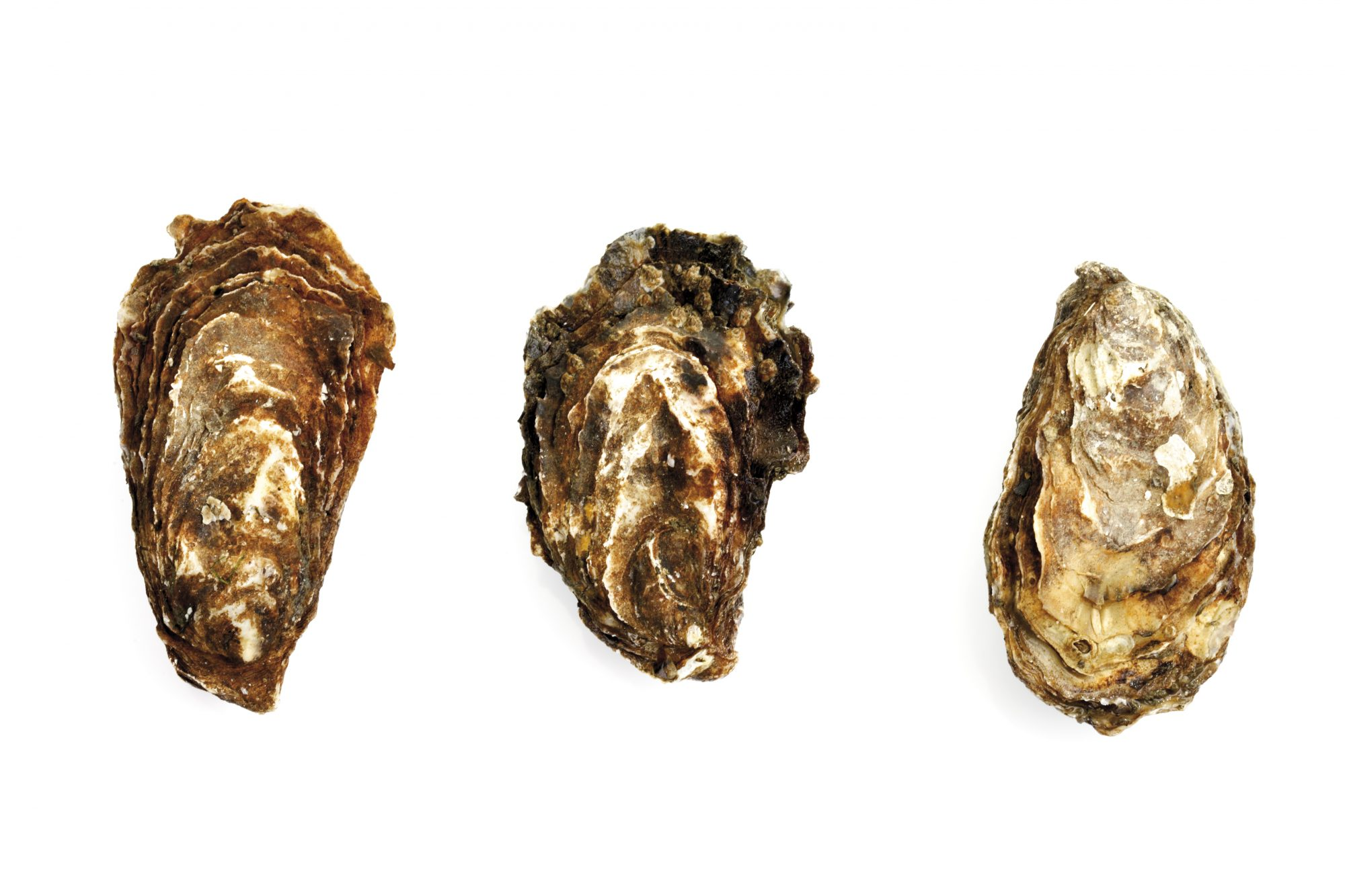 What Are 'Reserve Oysters,' and Why Are Chefs in Love with Them?