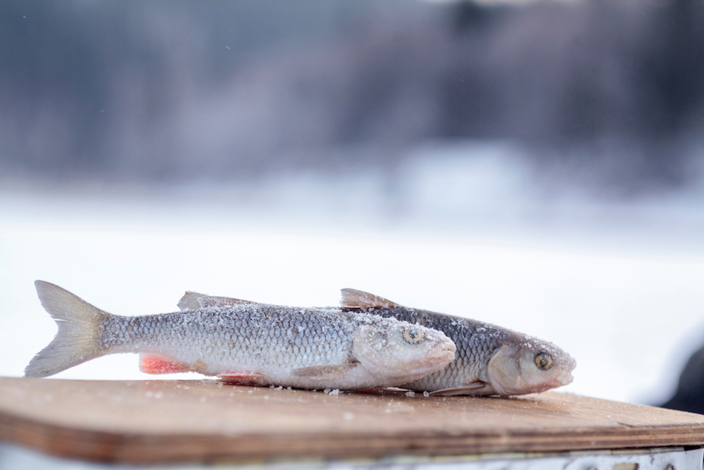 frozen-fish-blog718.jpg