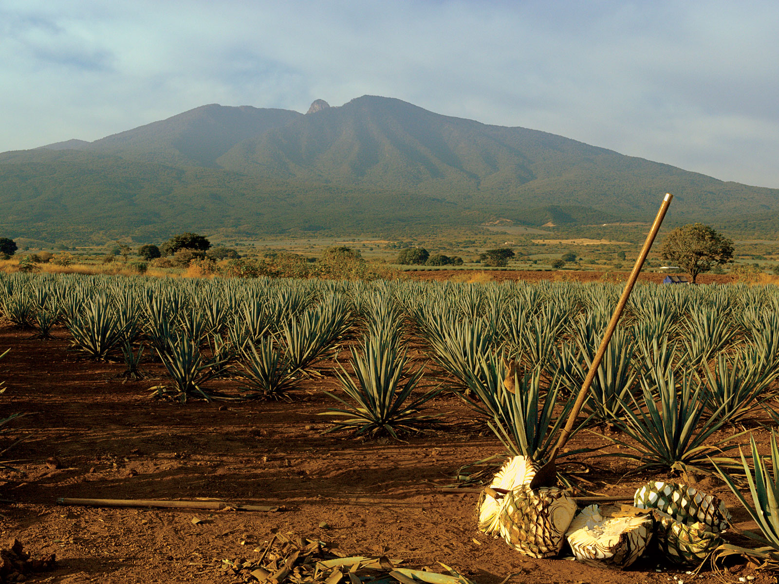 A Trip Along the Tequila Trail in Jalisco, Mexico