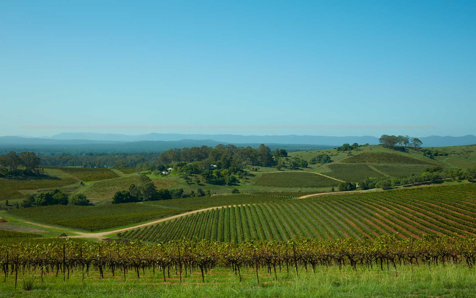 Australia's Oldest Wine Region Is One of Its Best-kept Secrets
