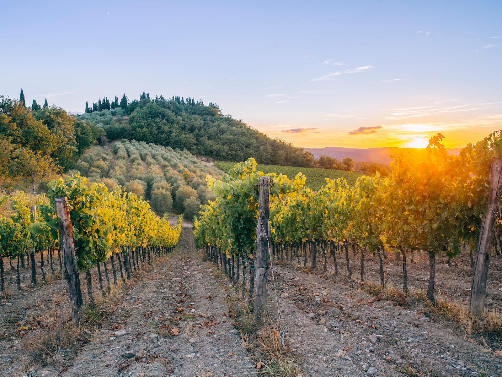 This App Is About to Make Visiting a Winery So Much Easier