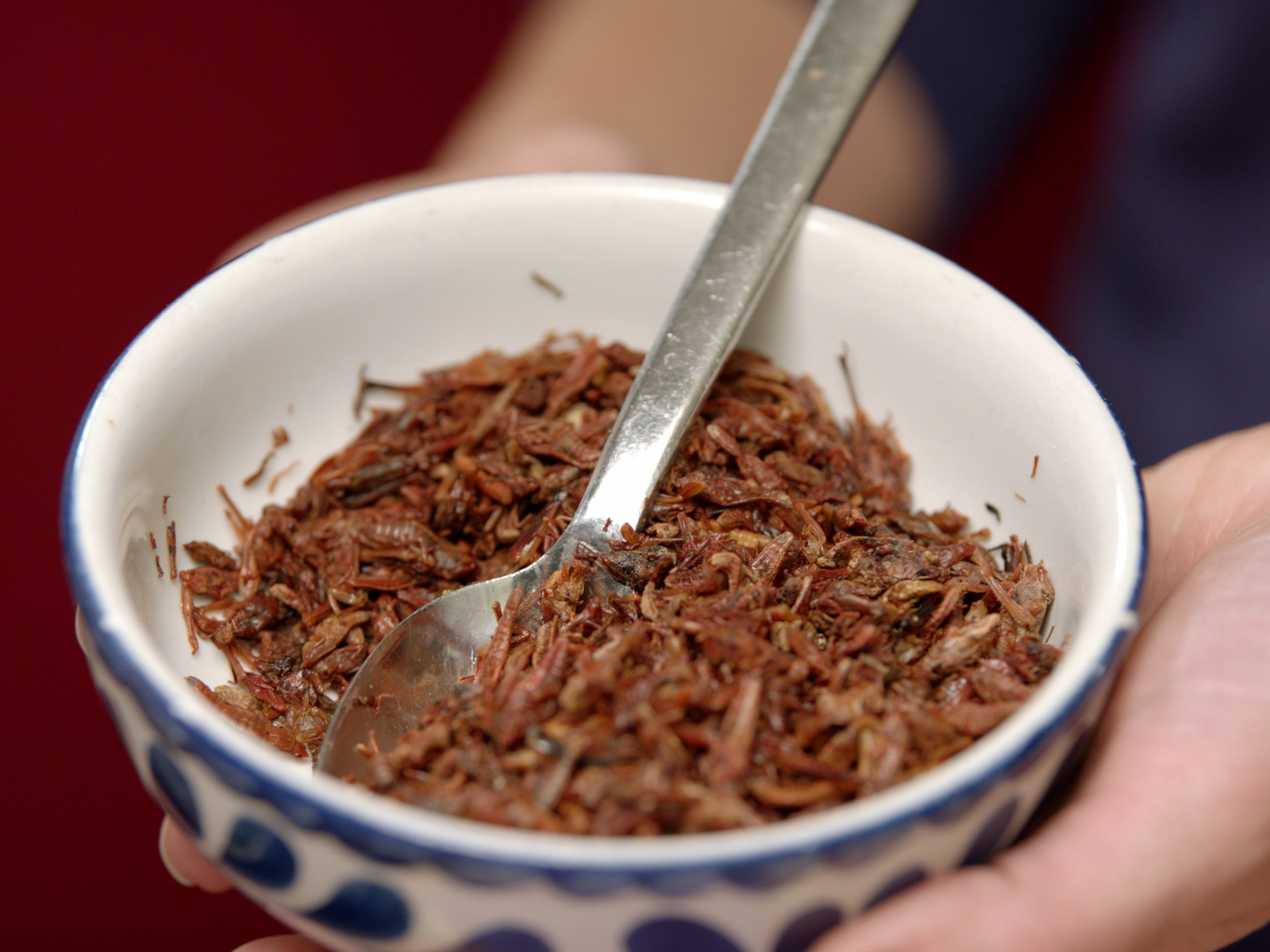 How to Swap Insect Ingredients Into Your Diet