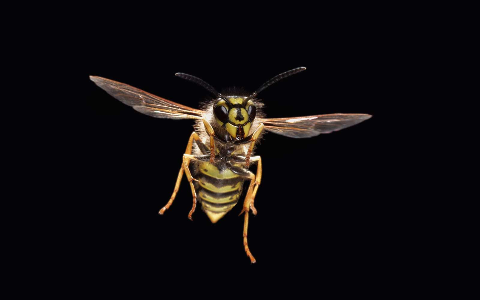 Drunk Wasps Are Going on 'Stinging Rampages' at U.K. Beer Gardens
