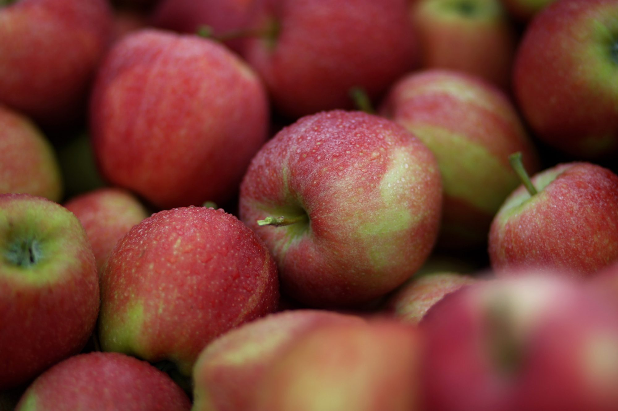 Apple Harvest At Lake Constance