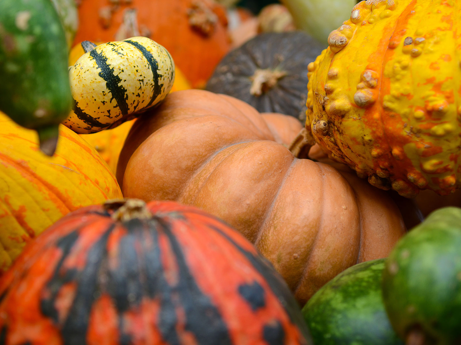 How to Choose the Right Pumpkin for the Job