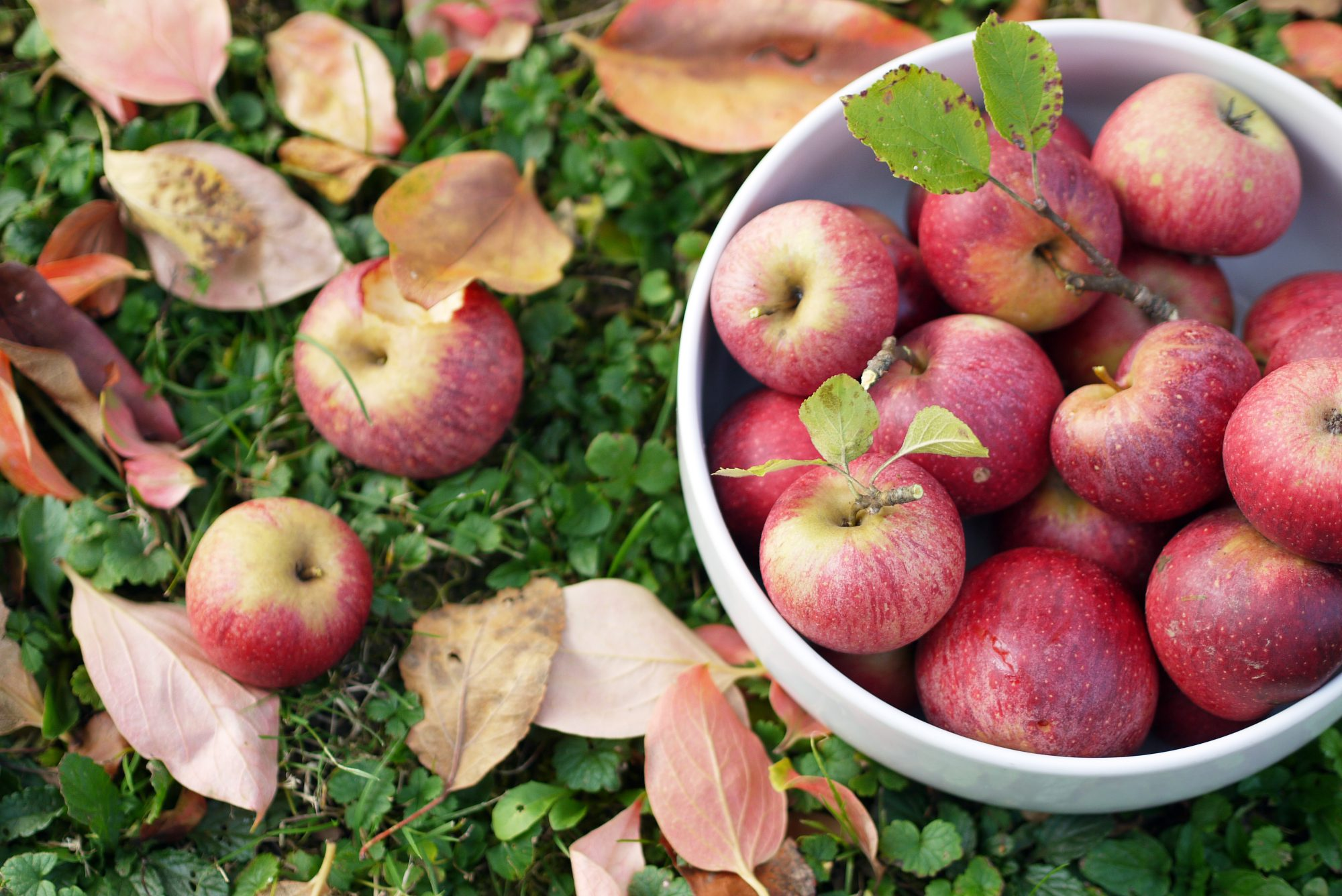 5 Places to Pick Apples and Drink Wine