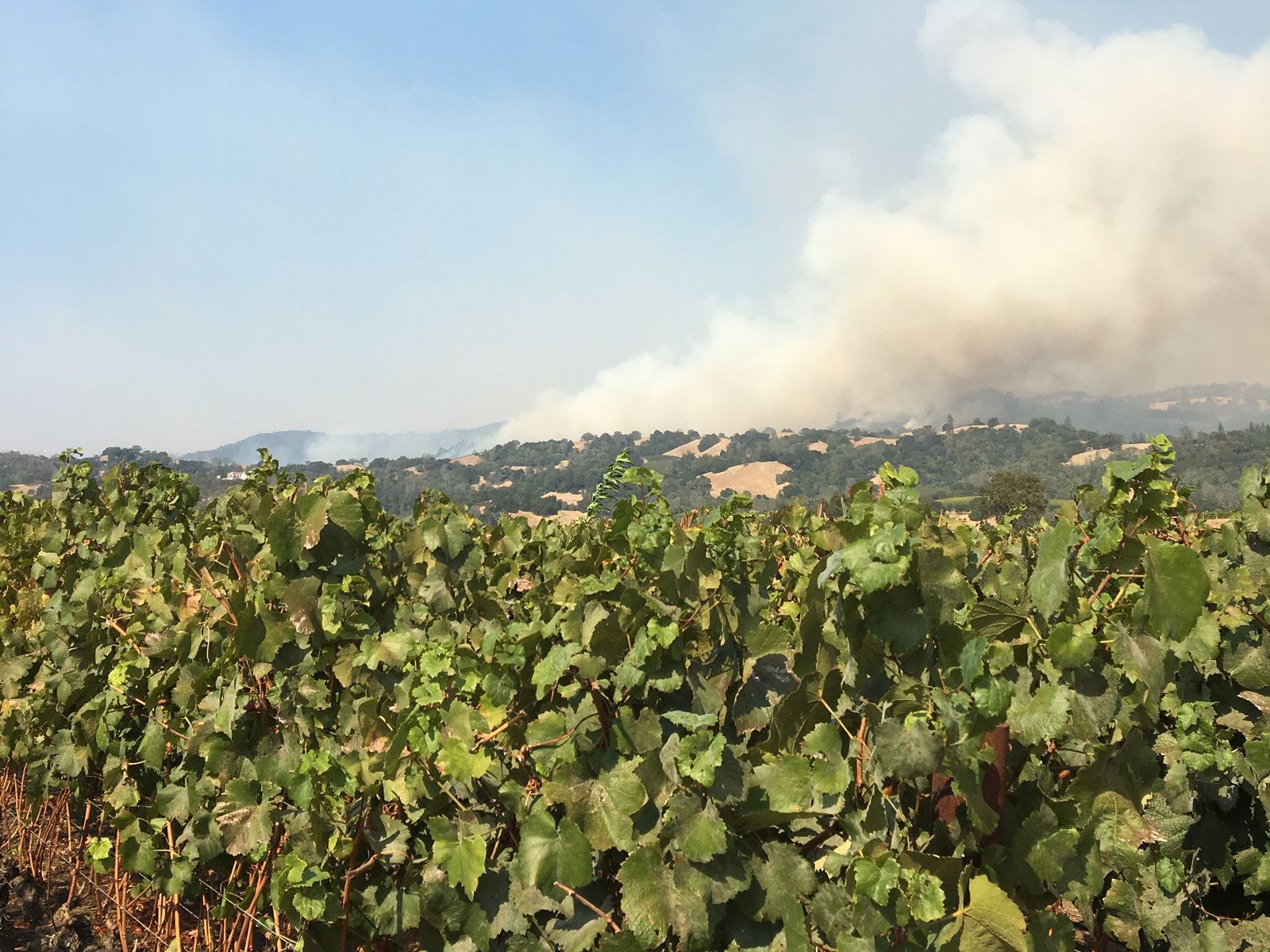 This Father-Son Duo Uses Ruined Wine Grapes to Help Napa Wildfire Victims: Here's How