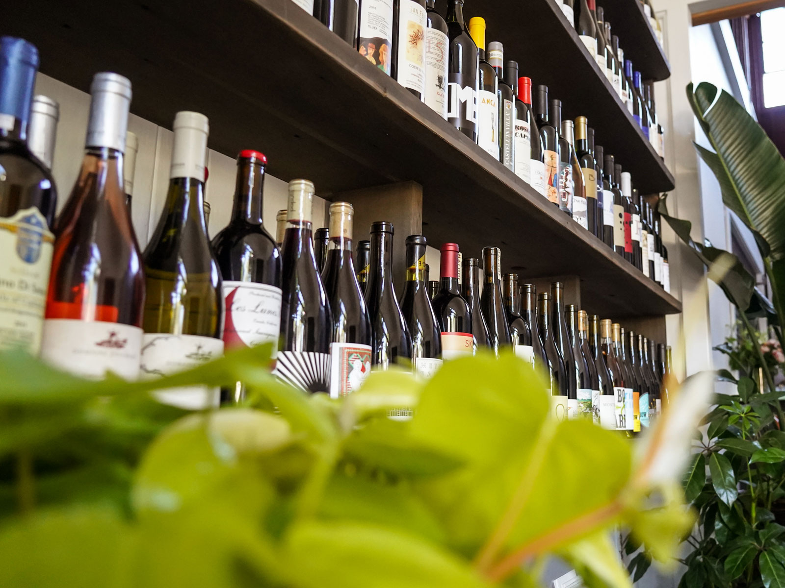Image result for georgian wines