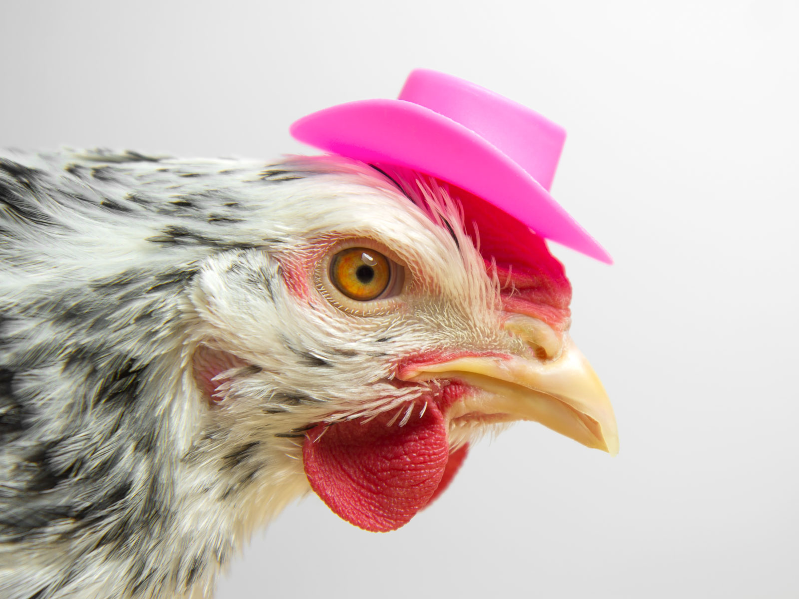 Go Ahead and Put Your Chickens in a Halloween Costume, CDC Says