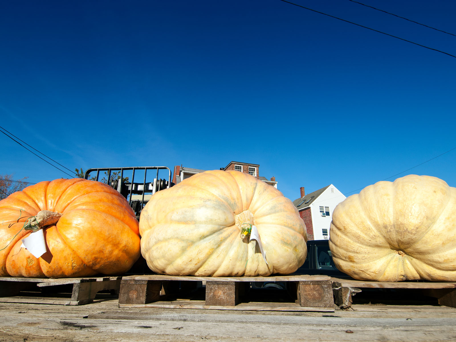Take a Look at North America's Heaviest Pumpkin Ever