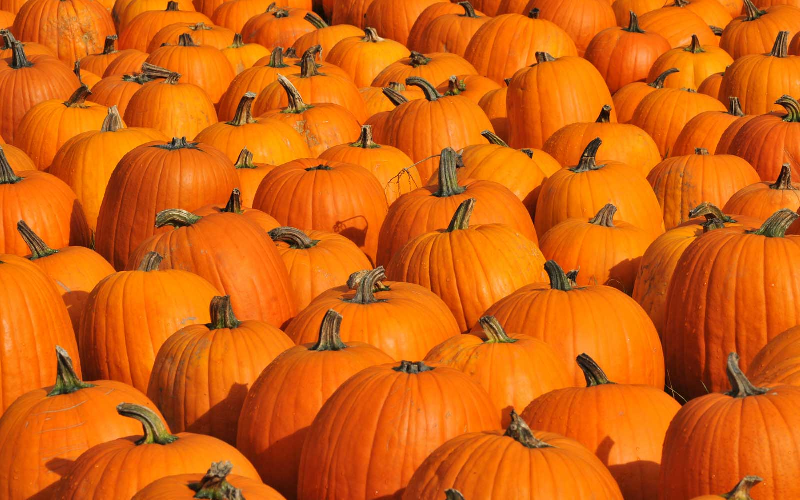 The 25 Best Pumpkin Patches in the U.S.