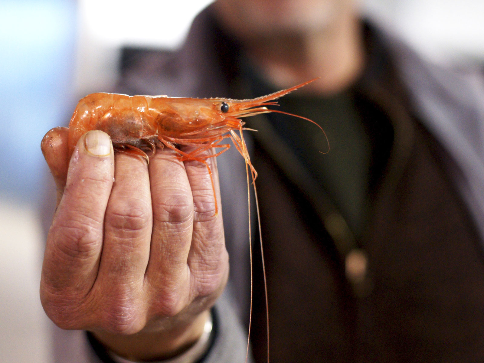 Good Luck Finding Maine Shrimp This Winter