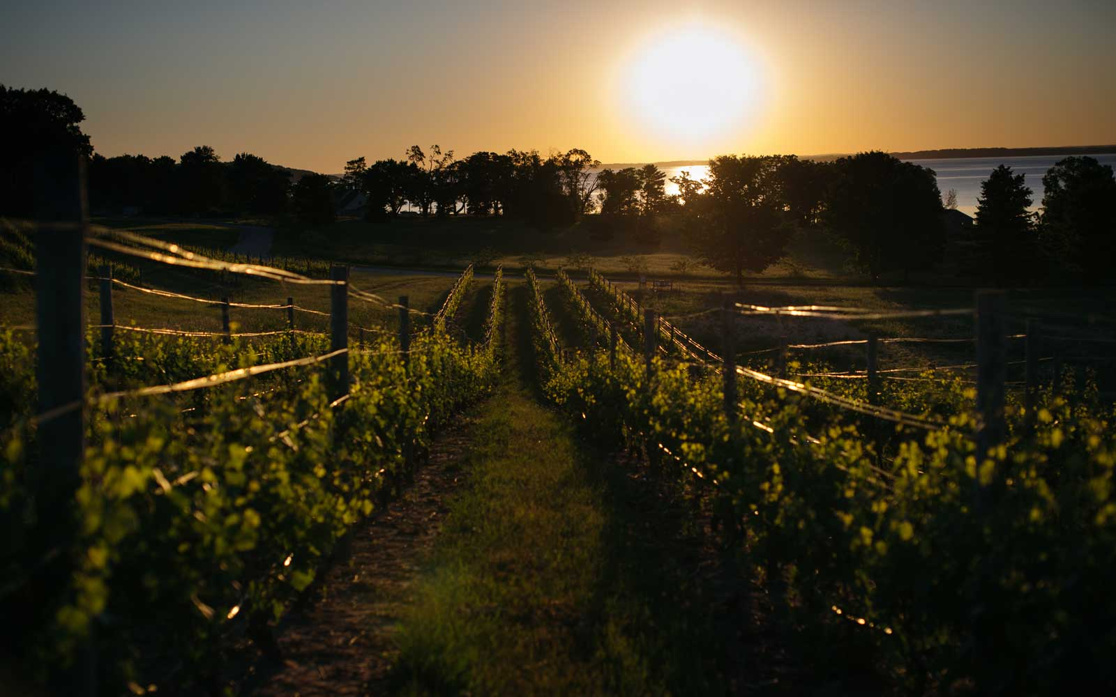 The Vineyards Around Traverse City, Michigan Are Putting the Midwest on the Wine Map